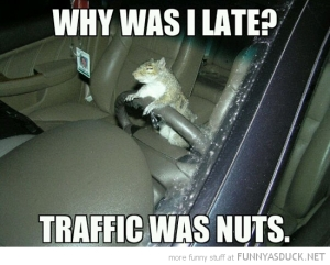 funny-squirrel-driving-car-why-late-traffic-nuts-pics