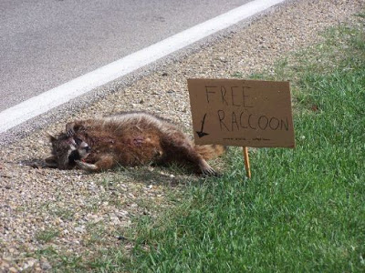 FreeRaccoon