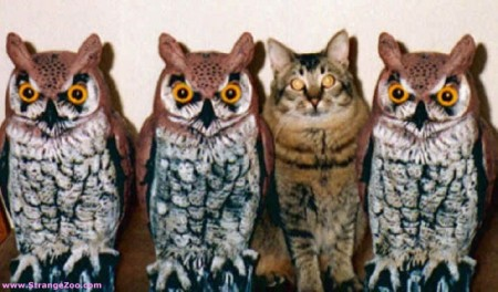 Not-Like-The-Others-Owls (1).jpg