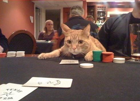 casino cat