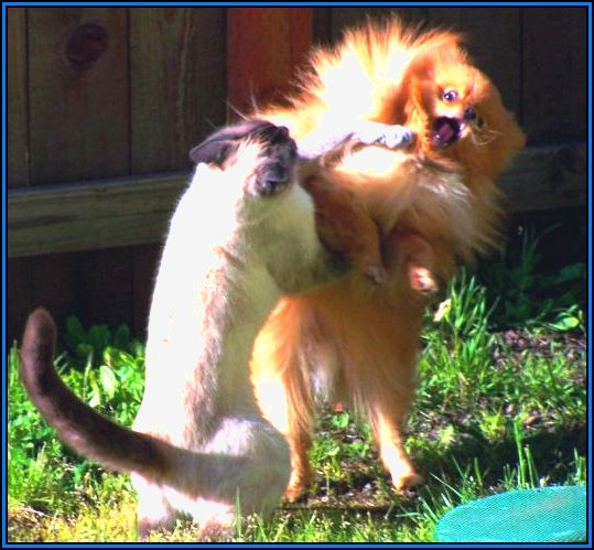 funny-cats-and-dogs-fighting