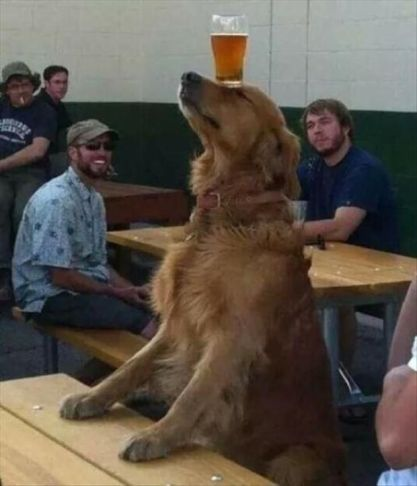 dog-balancing-beer-on-head-in-the-cafeteria-1449071456