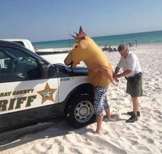 Man-in-Horse-Head-arrested-beach