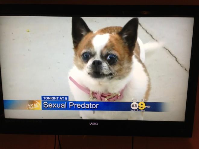 Dog predator