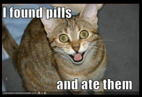 Stoned Cat
