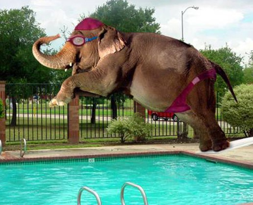 Elephant-Jumping-In-Swimming-Pool-Funny-Picture