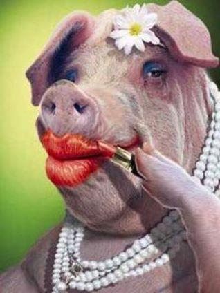 lipstick-on-a-pig_466562_1